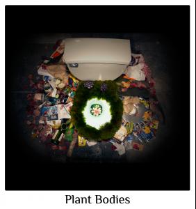 Plant Bodies 6