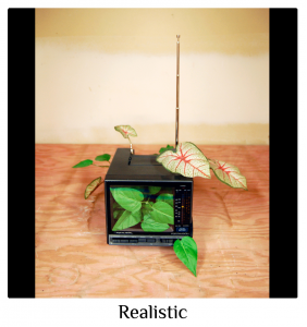 (2010) interactive TV/radio, fake plants, 26 in. x 8 in. x 14 in.